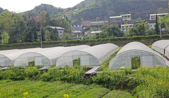 蔬菜种子实验基地甘肃科研基地