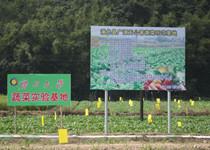 蔬菜种子合作社-浦北县广源无公害蔬菜示范基