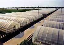 蔬菜种子合作社-寿光市锦强蔬菜专业合作社
