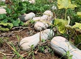 蔬菜种子种植户种植心得-一袋种子100粒下载宅男影视,轻松赚回3000元...